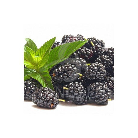 E-liquid Hngsen blackberry